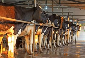In Luannan County, China, manure from dairy cattle will provide part of the feedstock for six new biogas digesters, which will be mixed with Landia's GasMix.
