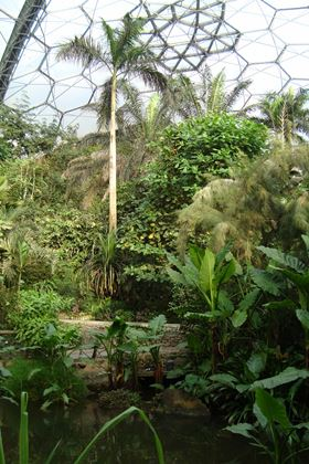 At the heart of Eden is the Rainforest Biome, the largest indoor rainforest in the world.