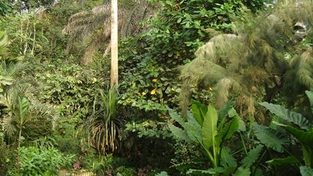 Hidrostal's success for the Eden Project